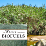 The Weedy Truth About Biofuels