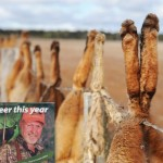 Is hunting conservation?
