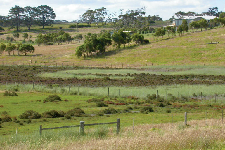 Weedy pasture plants for salinity control: Sowing the seeds of destruction