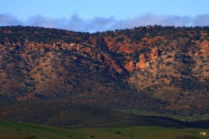 Flinders Ranges, Bounceback program