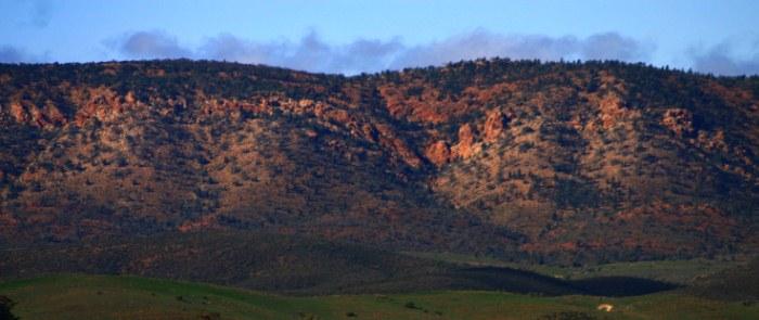 Flinders Ranges, Bounceback program