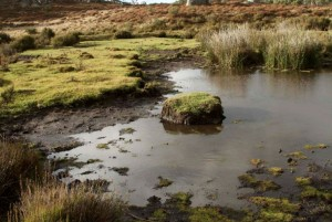 Engaging the community sector on environmental biosecurity