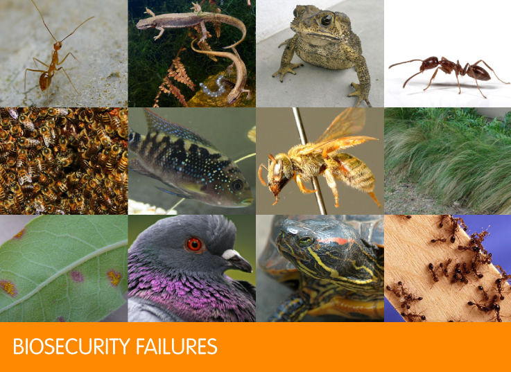 Biosecurity failures
