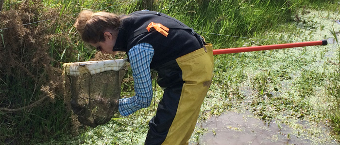 Ecology Australia's Katie Stevenson in search of the smooth newt in Melbourne. Photo: Andrew Cox