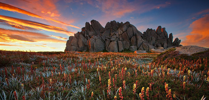 A cracking dawn lights up a stunning display of wildflowers in an area that may be kept feral horse free in Kosciuszko National Park if the new hire management plan is adopted. Photo: Tim Donnelly (CC BY-NC-ND 2.0)