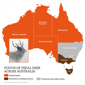 Status of feral deer across Australia
