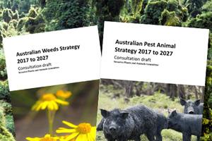 cradle-pests-weeds