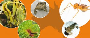 Environmental Biosecurity: Best Practice A Guide for Australian Policy-makers