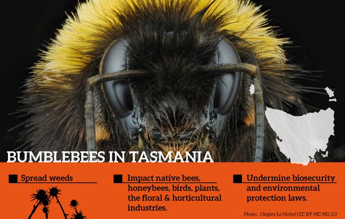 Tasmanian bumblebee decision defies the evidence Invasive Species