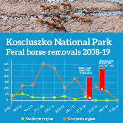 Kosciuszko National Park – feral horses removed 2008-19