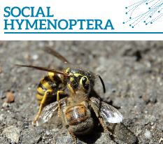 Invasion watch profile: Social Hymenoptera