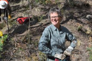 Sally Wayte, a Bushcare volunteer with the Friends of Knocklofty in Hobart, helps clear out gorse from bushland in Knocklofty Reserve. Photo: John Sampson Sally Wayte