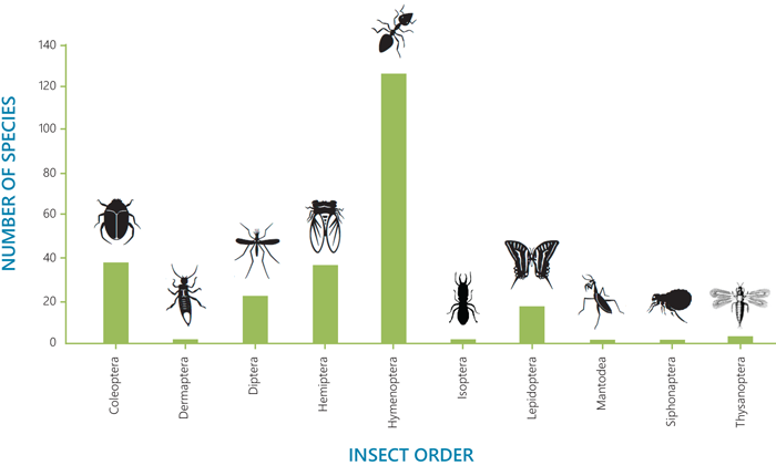 Insect orders with the highest numbers of environmentally harmful invasive insect species worldwide