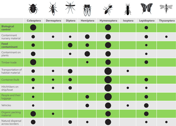 Introduction pathways by invasive insects