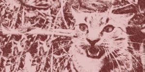 Feral cat illustration
