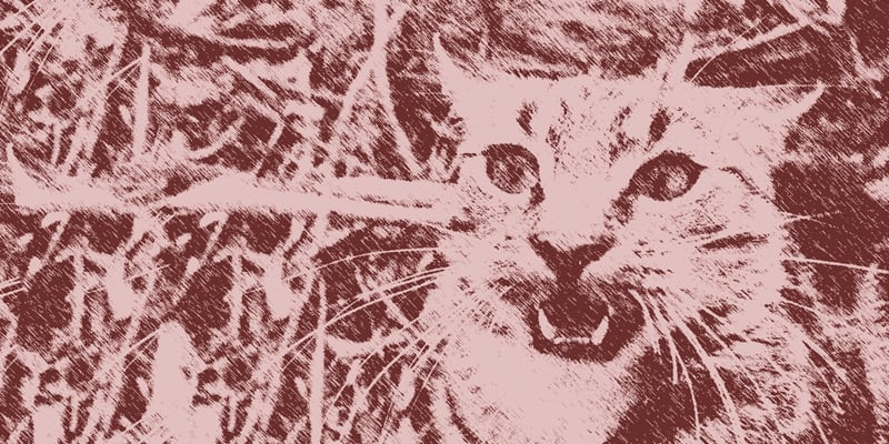 Feral cat illustration