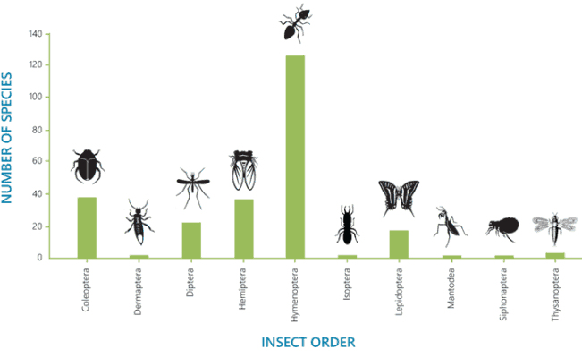 The insect orders with the highest numbers of environmentally harmful invasive insect species worldwide.