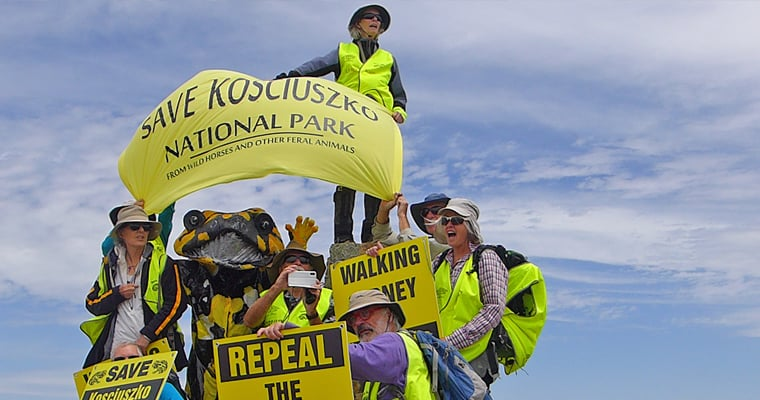 Passionate volunteers walk to the summit of Mt Kosciuszko calling for greater protection of Kosciuszko National Park from feral animals.