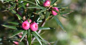 Tasmanian flora. Photo: John Sampson