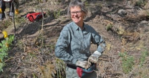 A volunteer clears out gorse with the Friends of Knocklofty Bushcare group.