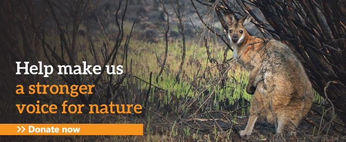 Help make us a stronger voice for nature: Donate now