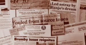 Newspaper clippings over the years reflect the sad state of feral horse control in NSW.