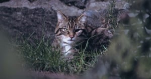 Stray cat hiding in the grass. Photo: Sean Paul Kinnear | Unsplash