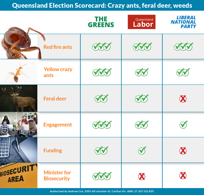 Queensland election scorecard: Policy commitments on yellow crazy ants, feral deer and weeds.