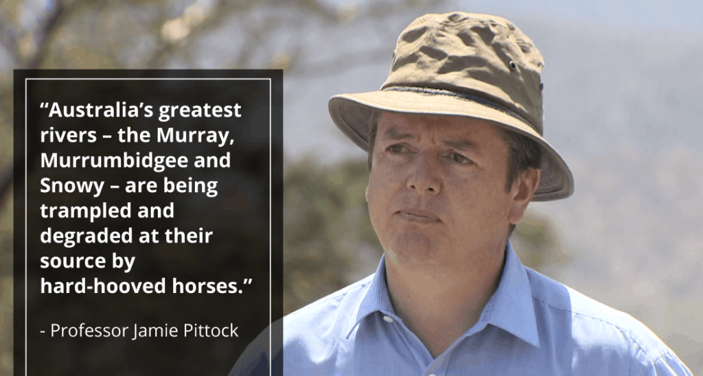 """""""Australia's greatest rivers – the Murray, Murrumbidgee and Snowy – are being trampled and degraded at their source by hard-hooved horses.""""  - Professor Jamie Pittock"""