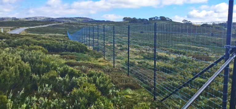High-cost fencing at New Species Gully in the Bogong High Plains is critical to protecting some of Australia's rarest alpine herbs and forbs from encroaching feral deer and horses.