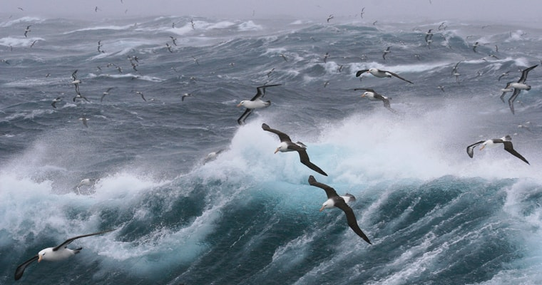 Albatross flying over southern ocean.