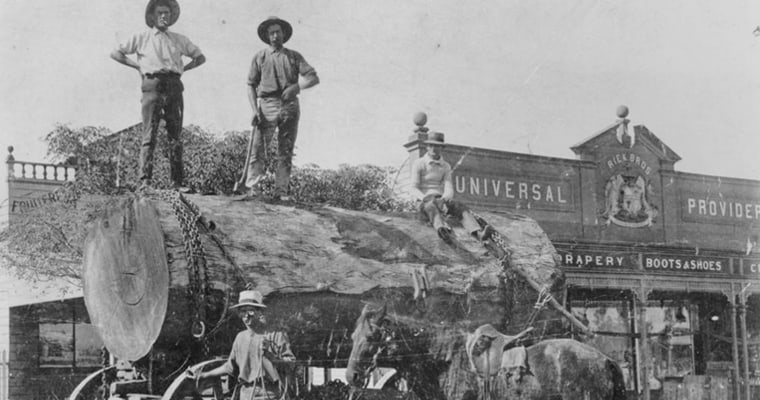 Loggers with large log Brisbane Street-Beaudesert ca 1915-Photo State Library of Queensland