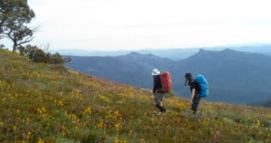 Australian Alps Walking Track in the Alpine National Park. Photo: Peter Conroy